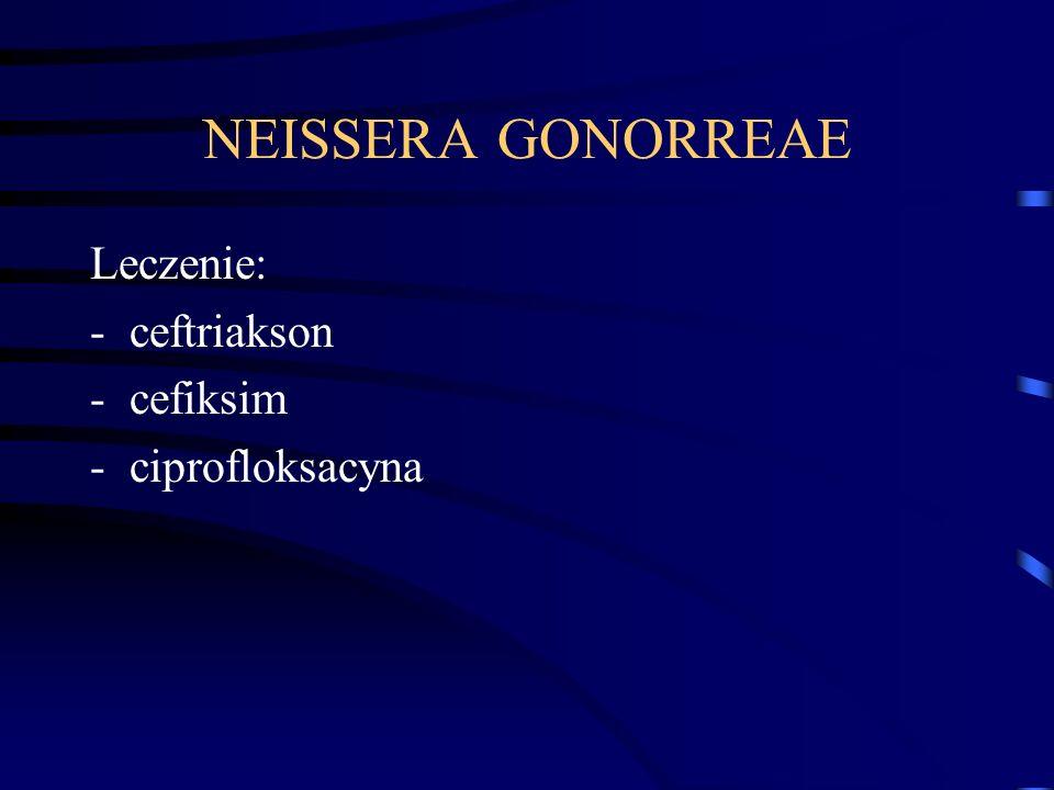 NEISSERA GONORREAE Leczenie: -ceftriakson -cefiksim -ciprofloksacyna