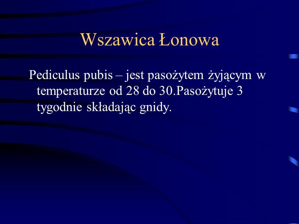 Wszawica Łonowa Pediculus pubis – jest pasożytem żyjącym w temperaturze od 28 do 30.Pasożytuje 3 tygodnie składając gnidy.