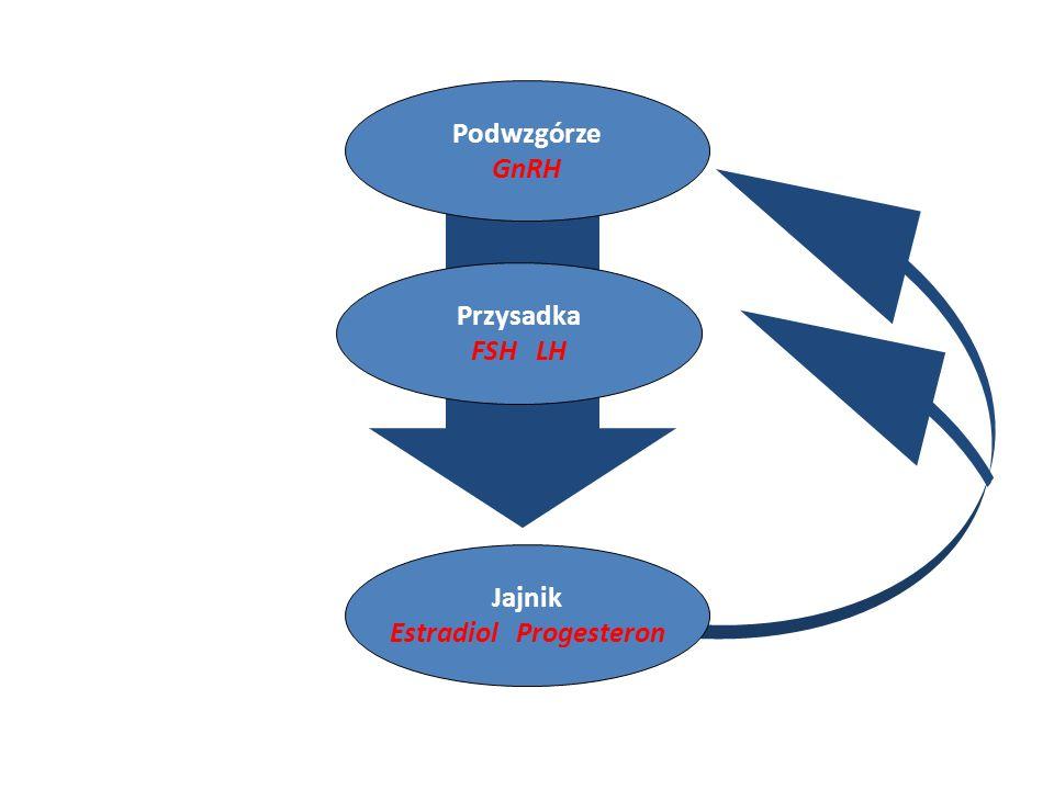 Podwzgórze GnRH Przysadka FSH LH Jajnik Estradiol Progesteron