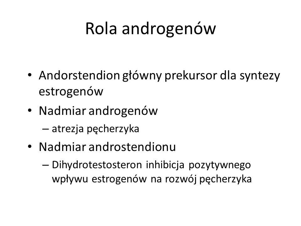 Rola androgenów Andorstendion główny prekursor dla syntezy estrogenów Nadmiar androgenów – atrezja pęcherzyka Nadmiar androstendionu – Dihydrotestosteron inhibicja pozytywnego wpływu estrogenów na rozwój pęcherzyka