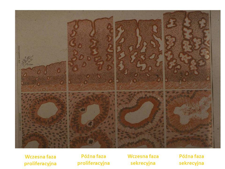 Diagnostyka owulacji Oznaki pośrednie: – BBT – Ocena śluzu szyjkowego – Rozmaz cytohormonalny – Ból owulacyjny – Krwawienie owulacyjne – Oznaczenia hormonalne (E2, P, LH) – USG