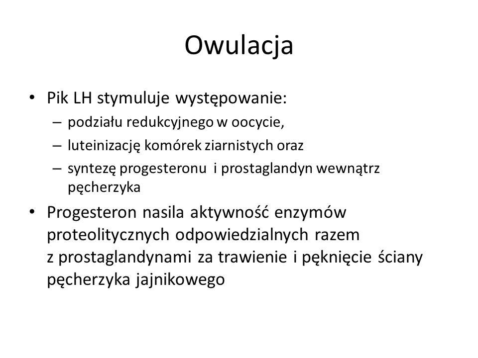 Owulacja Pik LH stymuluje występowanie: – podziału redukcyjnego w oocycie, – luteinizację komórek ziarnistych oraz – syntezę progesteronu i prostaglan