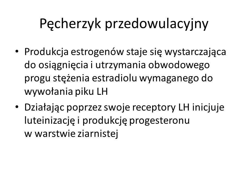 Pęcherzyk przedowulacyjny Produkcja estrogenów staje się wystarczająca do osiągnięcia i utrzymania obwodowego progu stężenia estradiolu wymaganego do