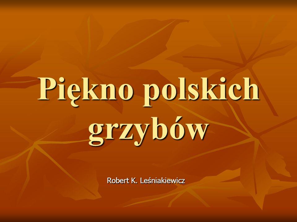 Piękno polskich grzybów Robert K. Leśniakiewicz Robert K. Leśniakiewicz