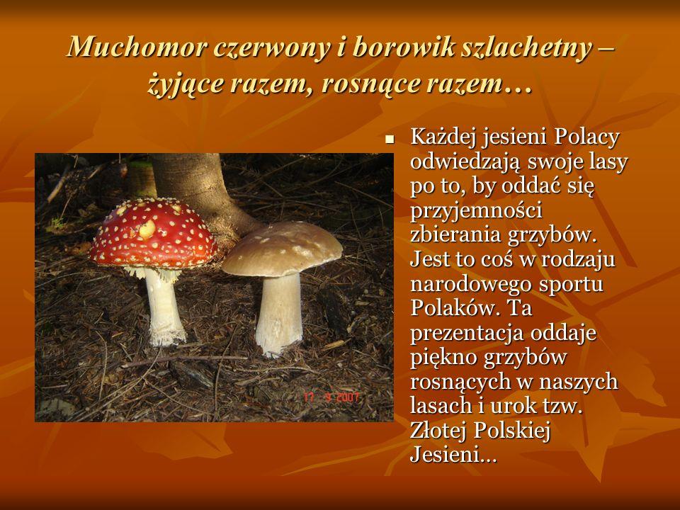 Muchomor czerwony i borowik szlachetny – żyjące razem, rosnące razem… Każdej jesieni Polacy odwiedzają swoje lasy po to, by oddać się przyjemności zbi