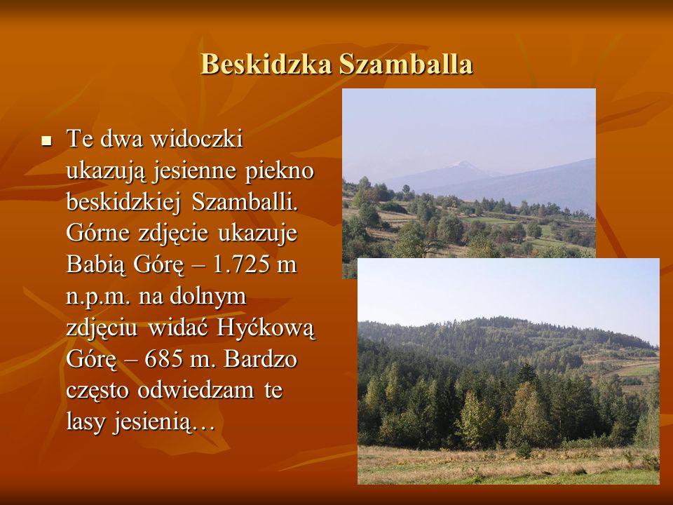 Beskidzka Szamballa Te dwa widoczki ukazują jesienne piekno beskidzkiej Szamballi. Górne zdjęcie ukazuje Babią Górę – 1.725 m n.p.m. na dolnym zdjęciu