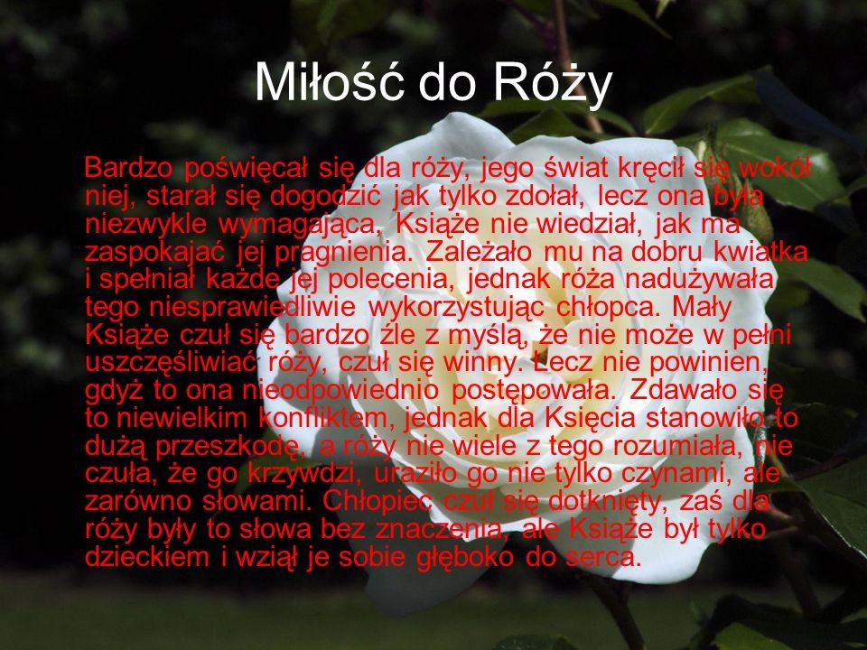 Miłość do Róży Bardzo poświęcał się dla róży, jego świat kręcił się wokół niej, starał się dogodzić jak tylko zdołał, lecz ona była niezwykle wymagają