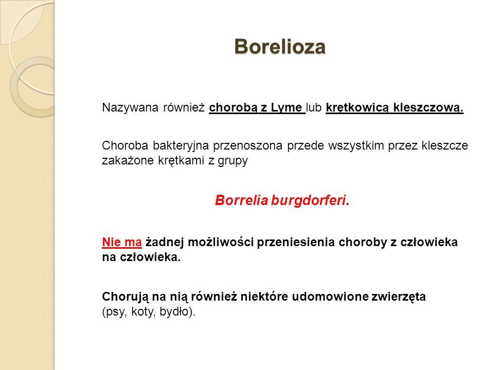 Borelioza Nazywana również chorobą z Lyme lub krętkowicą kleszczową. Choroba bakteryjna przenoszona przede wszystkim przez kleszcze zakażone krętkami