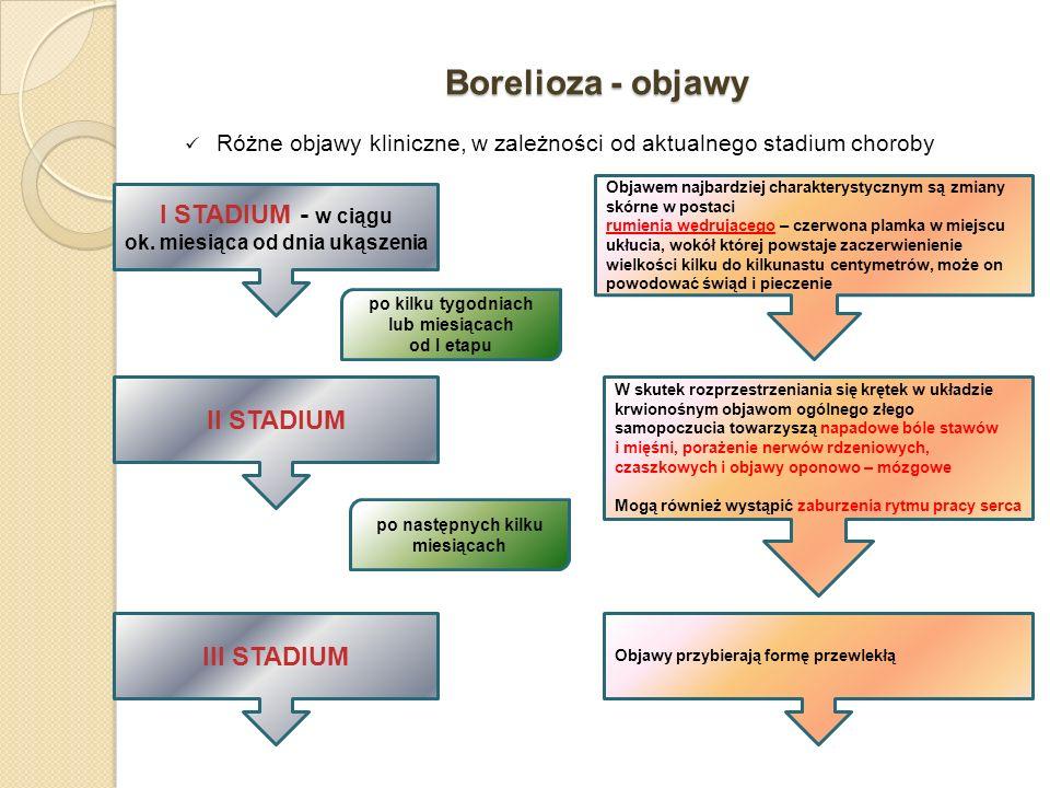 Borelioza - objawy Różne objawy kliniczne, w zależności od aktualnego stadium choroby I STADIUM - w ciągu ok. miesiąca od dnia ukąszenia II STADIUM Ob