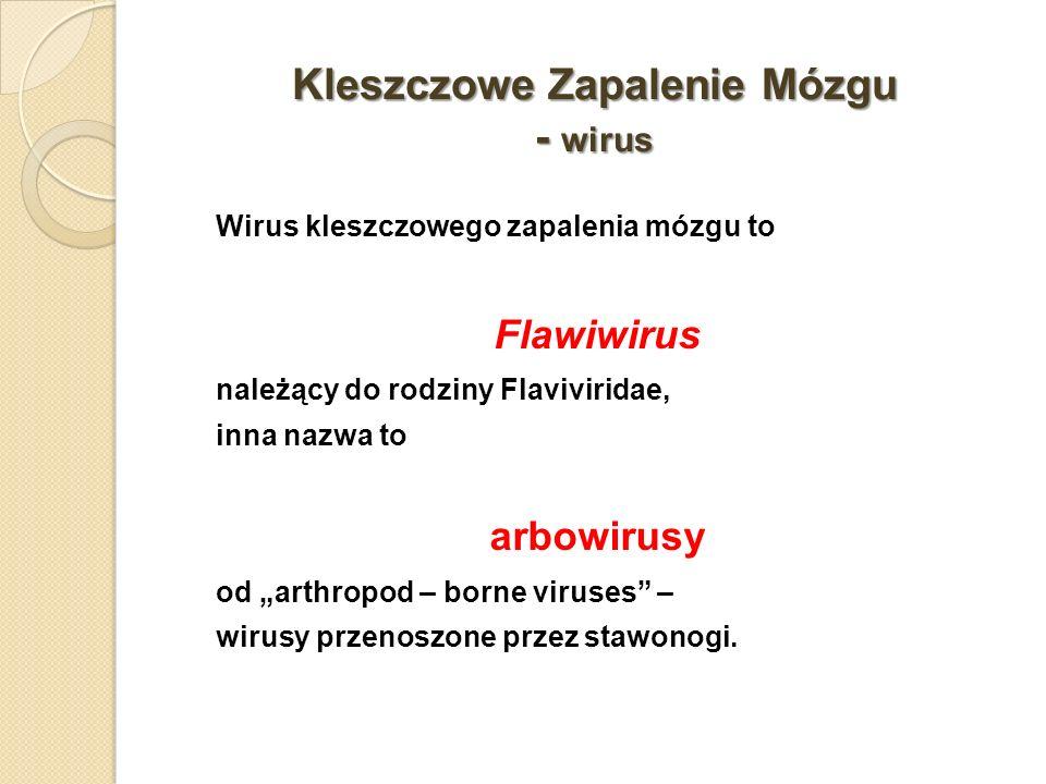 Kleszczowe Zapalenie Mózgu - wirus Wirus kleszczowego zapalenia mózgu to Flawiwirus należący do rodziny Flaviviridae, inna nazwa to arbowirusy od arth