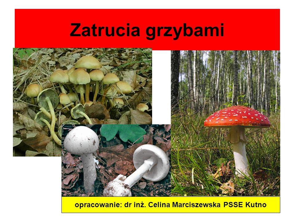 Zatrucia grzybami opracowanie: dr inż. Celina Marciszewska PSSE Kutno