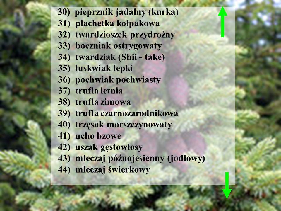 30) pieprznik jadalny (kurka) 31) płachetka kołpakowa 32) twardzioszek przydrożny 33) boczniak ostrygowaty 34) twardziak (Shii - take) 35) łuskwiak le