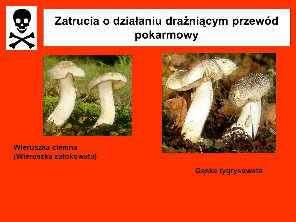 Zatrucia o działaniu drażniącym przewód pokarmowy Wieruszka ciemna (Wieruszka zatokowata) Gąska tygrysowata