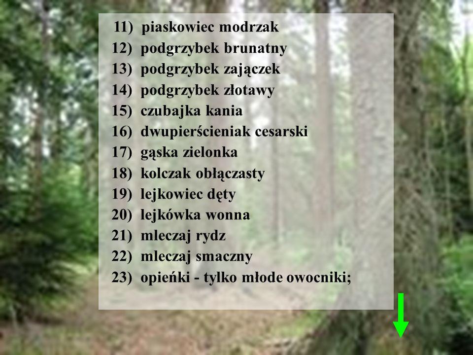11) piaskowiec modrzak 12) podgrzybek brunatny 13) podgrzybek zajączek 14) podgrzybek złotawy 15) czubajka kania 16) dwupierścieniak cesarski 17) gąsk