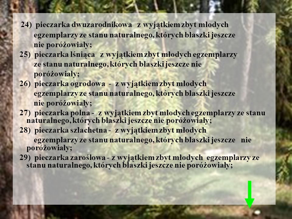 24) pieczarka dwuzarodnikowa z wyjątkiem zbyt młodych egzemplarzy ze stanu naturalnego, których blaszki jeszcze nie poróżowiały; 25) pieczarka lśniąca