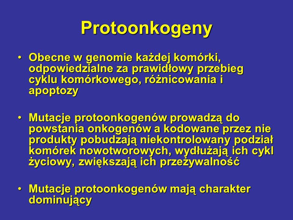 Protoonkogeny Obecne w genomie każdej komórki, odpowiedzialne za prawidłowy przebieg cyklu komórkowego, różnicowania i apoptozyObecne w genomie każdej