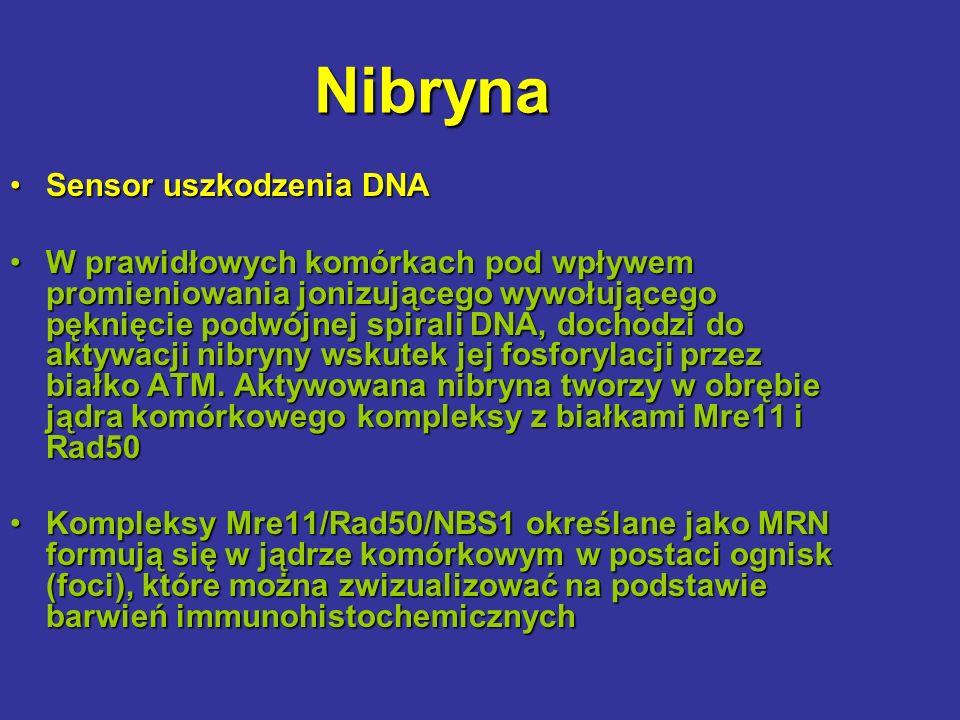 Nibryna Sensor uszkodzenia DNASensor uszkodzenia DNA W prawidłowych komórkach pod wpływem promieniowania jonizującego wywołującego pęknięcie podwójnej