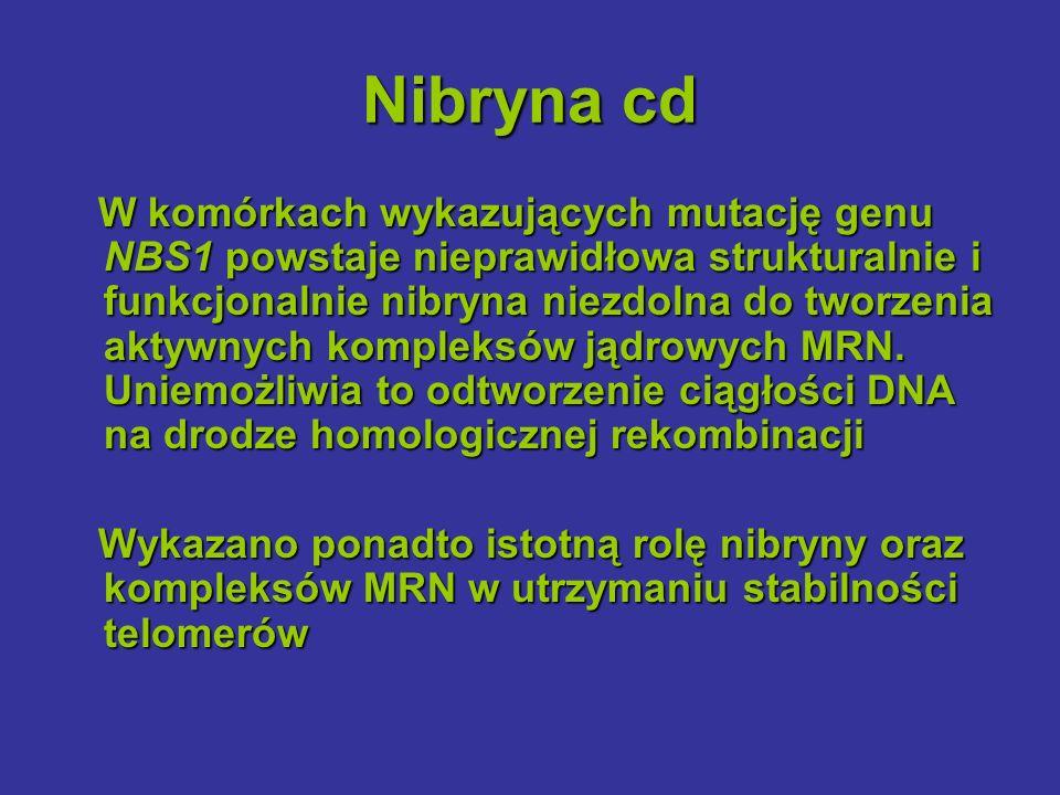 Nibryna cd W komórkach wykazujących mutację genu NBS1 powstaje nieprawidłowa strukturalnie i funkcjonalnie nibryna niezdolna do tworzenia aktywnych ko