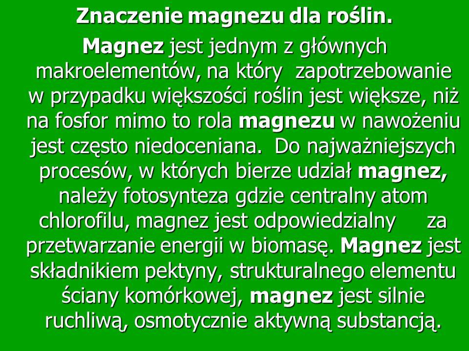 Znaczenie magnezu dla roślin. Magnez jest jednym z głównych makroelementów, na który zapotrzebowanie w przypadku większości roślin jest większe, niż n