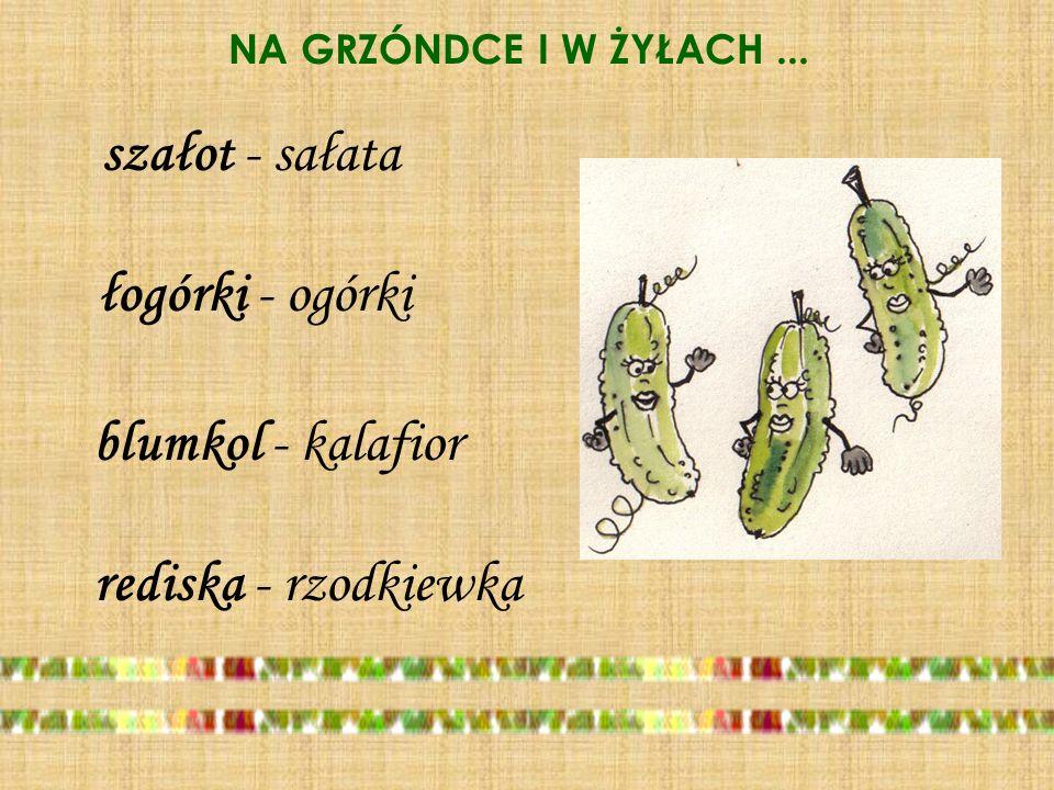 szałot - sałata łogórki - ogórki blumkol - kalafior rediska - rzodkiewka NA GRZÓNDCE I W ŻYŁACH...