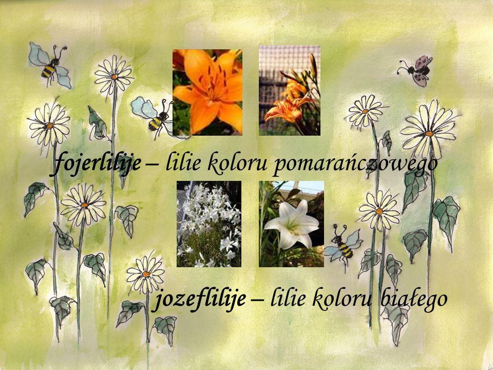 fojerlilije – lilie koloru pomarańczowego jozeflilije – lilie koloru białego