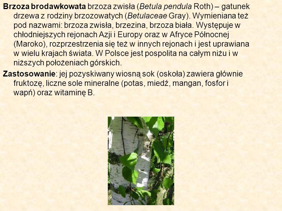 Brzoza brodawkowata brzoza zwisła (Betula pendula Roth) – gatunek drzewa z rodziny brzozowatych (Betulaceae Gray). Wymieniana też pod nazwami: brzoza