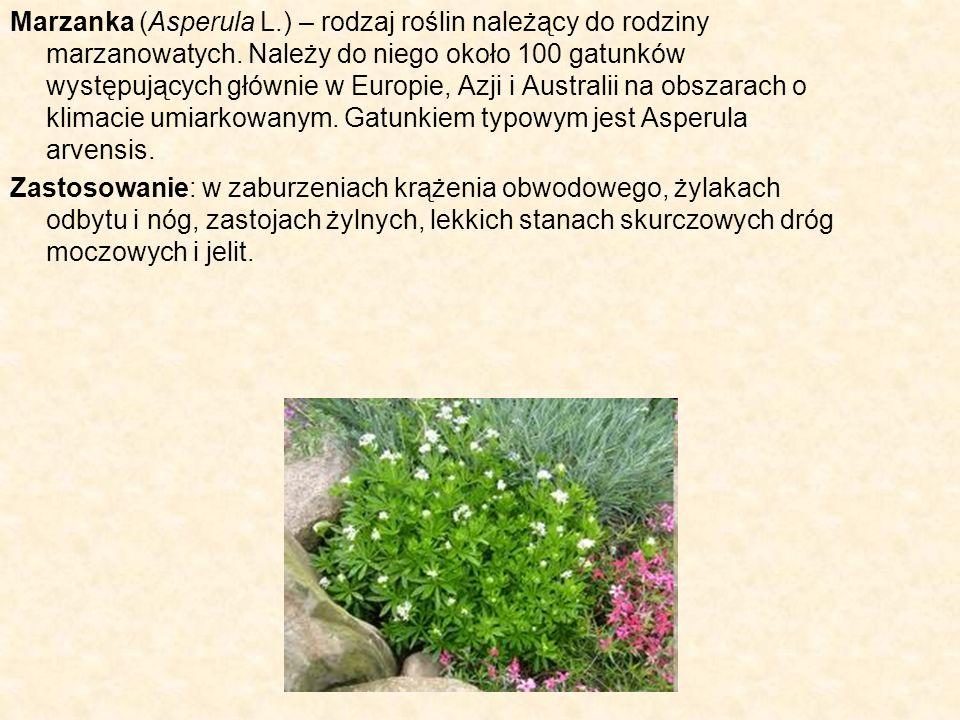 Marzanka (Asperula L.) – rodzaj roślin należący do rodziny marzanowatych. Należy do niego około 100 gatunków występujących głównie w Europie, Azji i A