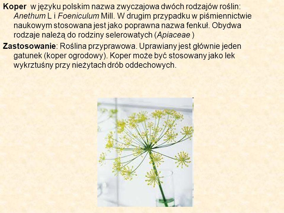 Koper w języku polskim nazwa zwyczajowa dwóch rodzajów roślin: Anethum L i Foeniculum Mill. W drugim przypadku w piśmiennictwie naukowym stosowana jes