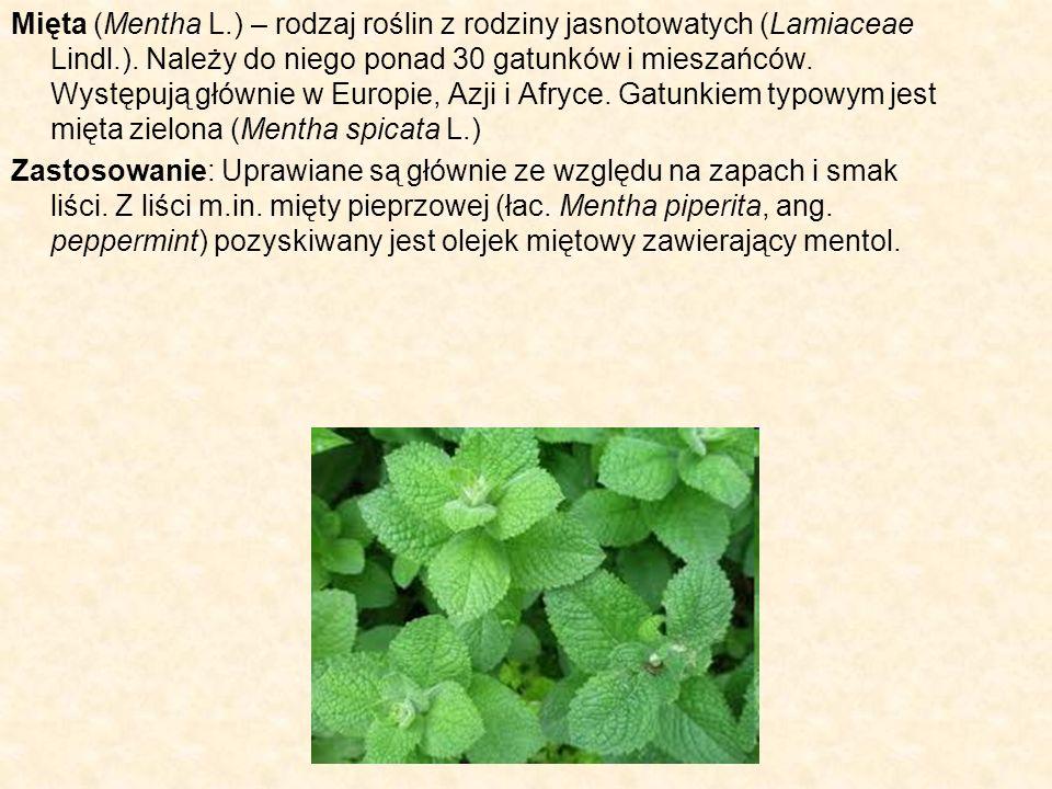 Mięta (Mentha L.) – rodzaj roślin z rodziny jasnotowatych (Lamiaceae Lindl.). Należy do niego ponad 30 gatunków i mieszańców. Występują głównie w Euro