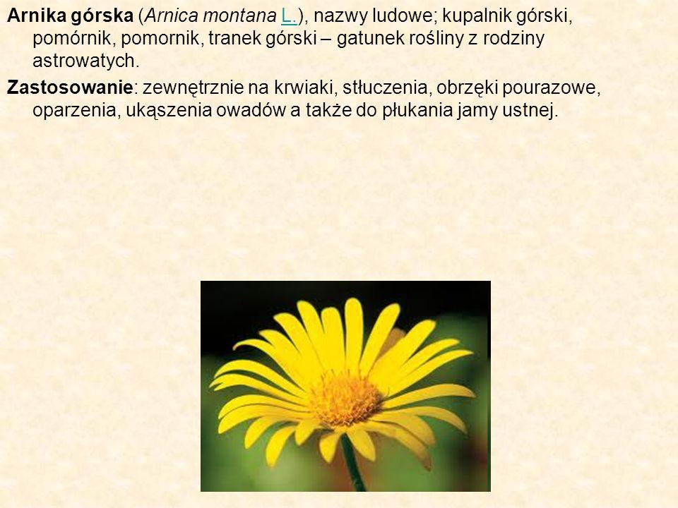 Arnika górska (Arnica montana L.), nazwy ludowe; kupalnik górski, pomórnik, pomornik, tranek górski – gatunek rośliny z rodziny astrowatych.L. Zastoso