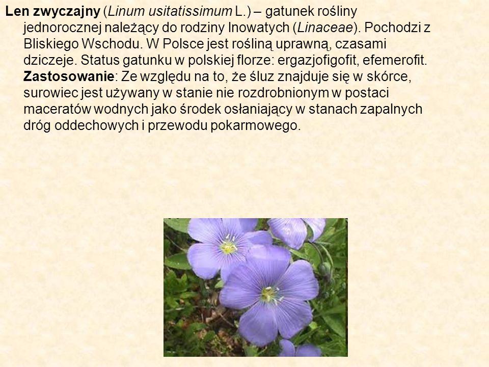 Len zwyczajny (Linum usitatissimum L.) – gatunek rośliny jednorocznej należący do rodziny lnowatych (Linaceae). Pochodzi z Bliskiego Wschodu. W Polsce