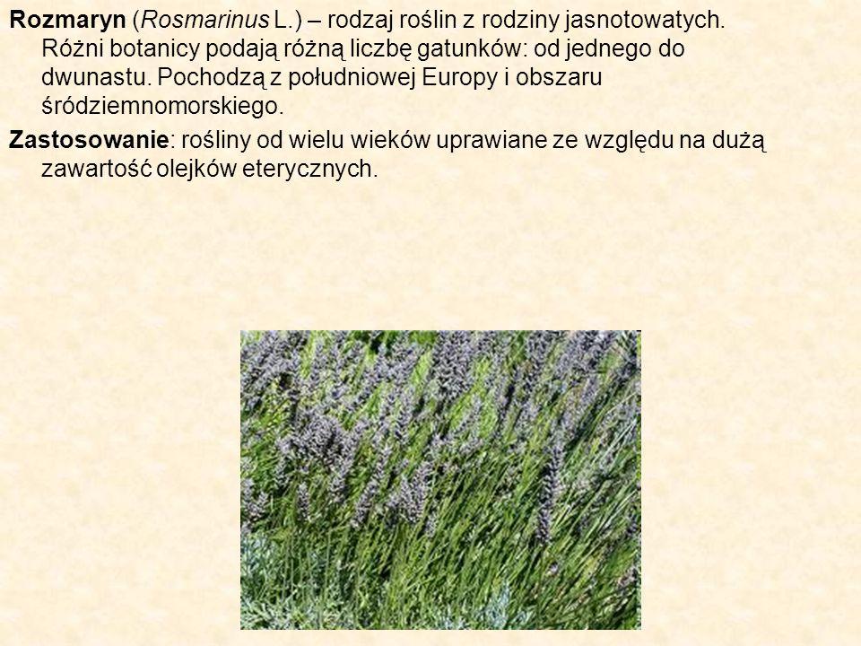 Rozmaryn (Rosmarinus L.) – rodzaj roślin z rodziny jasnotowatych. Różni botanicy podają różną liczbę gatunków: od jednego do dwunastu. Pochodzą z połu