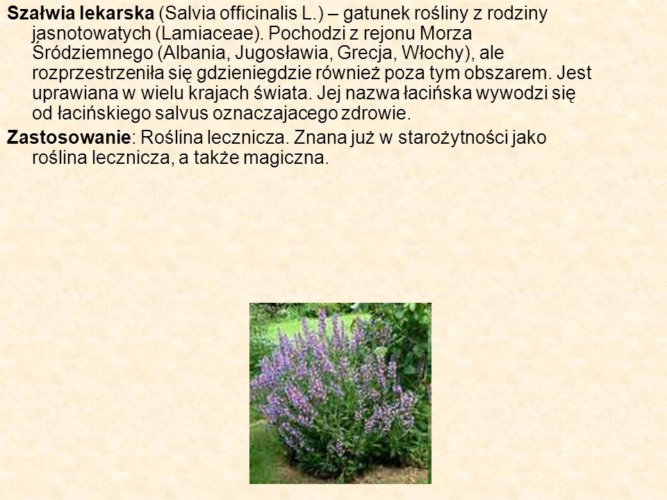 Szałwia lekarska (Salvia officinalis L.) – gatunek rośliny z rodziny jasnotowatych (Lamiaceae). Pochodzi z rejonu Morza Śródziemnego (Albania, Jugosła