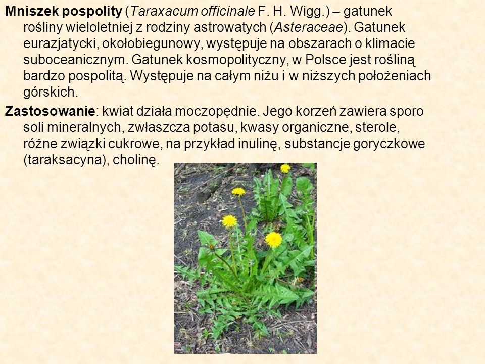 Mniszek pospolity (Taraxacum officinale F. H. Wigg.) – gatunek rośliny wieloletniej z rodziny astrowatych (Asteraceae). Gatunek eurazjatycki, okołobie