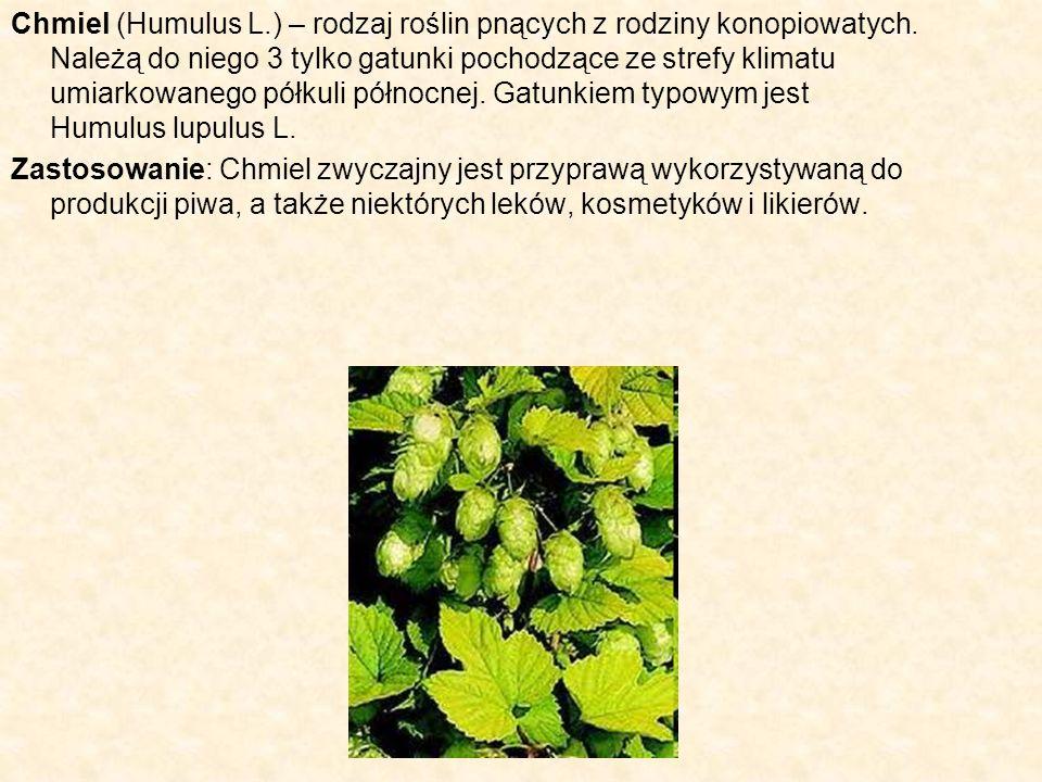 Chmiel (Humulus L.) – rodzaj roślin pnących z rodziny konopiowatych. Należą do niego 3 tylko gatunki pochodzące ze strefy klimatu umiarkowanego półkul