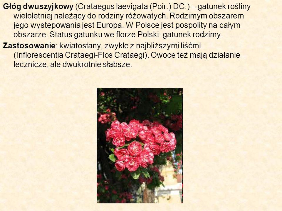 Głóg dwuszyjkowy (Crataegus laevigata (Poir.) DC.) – gatunek rośliny wieloletniej należący do rodziny różowatych. Rodzimym obszarem jego występowania