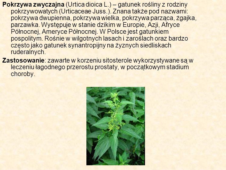 Pokrzywa zwyczajna (Urtica dioica L.) – gatunek rośliny z rodziny pokrzywowatych (Urticaceae Juss.). Znana także pod nazwami: pokrzywa dwupienna, pokr