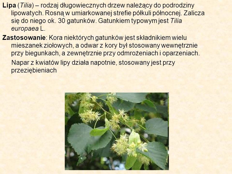 Lipa (Tilia) – rodzaj długowiecznych drzew należący do podrodziny lipowatych. Rosną w umiarkowanej strefie półkuli północnej. Zalicza się do niego ok.