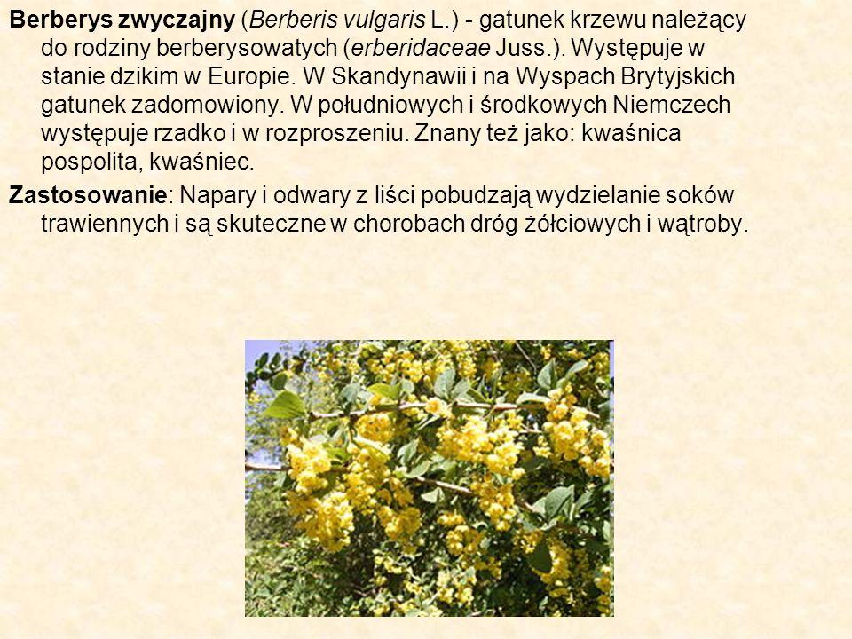 Berberys zwyczajny (Berberis vulgaris L.) - gatunek krzewu należący do rodziny berberysowatych (erberidaceae Juss.). Występuje w stanie dzikim w Europ