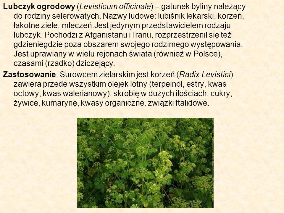 Lubczyk ogrodowy (Levisticum officinale) – gatunek byliny należący do rodziny selerowatych. Nazwy ludowe: lubiśnik lekarski, korzeń, łakotne ziele, ml