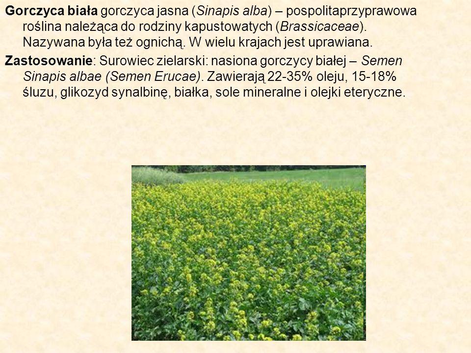 Gorczyca biała gorczyca jasna (Sinapis alba) – pospolitaprzyprawowa roślina należąca do rodziny kapustowatych (Brassicaceae). Nazywana była też ognich