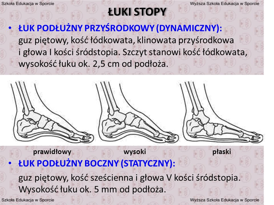 ŁUKI STOPY ŁUK PODŁUŻNY PRZYŚRODKOWY (DYNAMICZNY): guz piętowy, kość łódkowata, klinowata przyśrodkowa i głowa I kości śródstopia. Szczyt stanowi kość