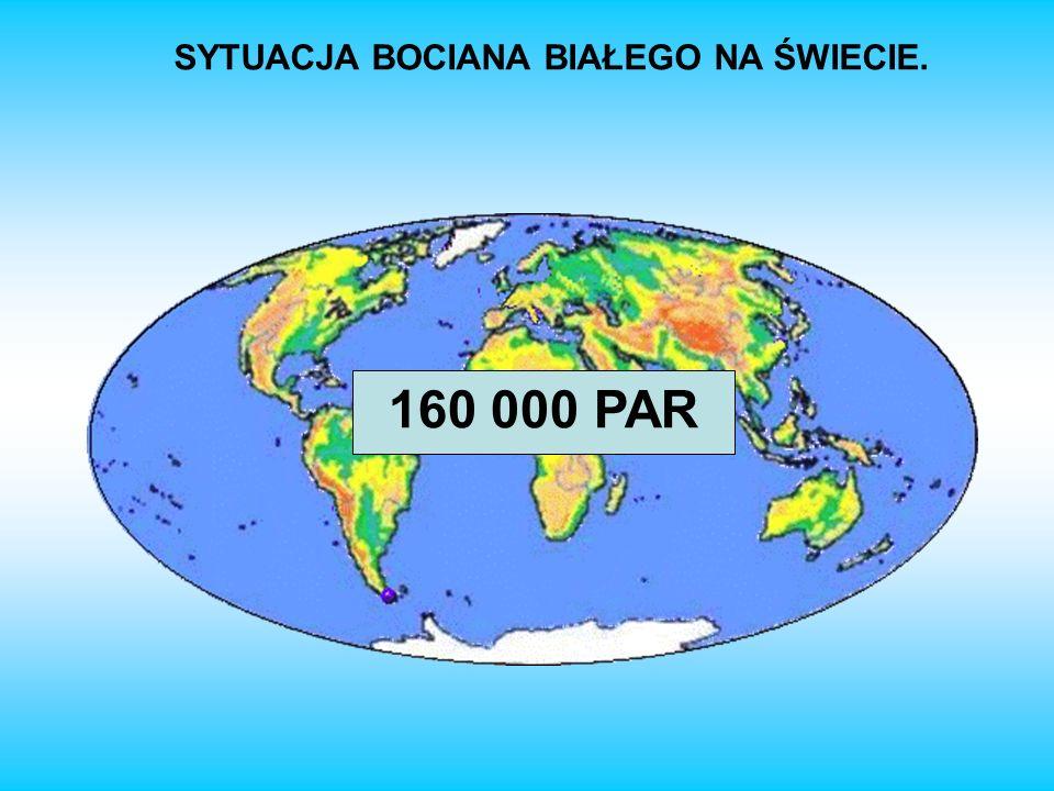 SYTUACJA BOCIANA BIAŁEGO NA ŚWIECIE. 160 000 PAR