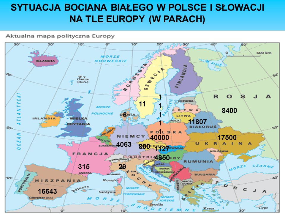 SYTUACJA BOCIANA BIAŁEGO W POLSCE I SŁOWACJI NA TLE EUROPY (W PARACH) 1111111111 11 40000 6 1127 4850 800 4063 31529 17500 11807 8400 16643