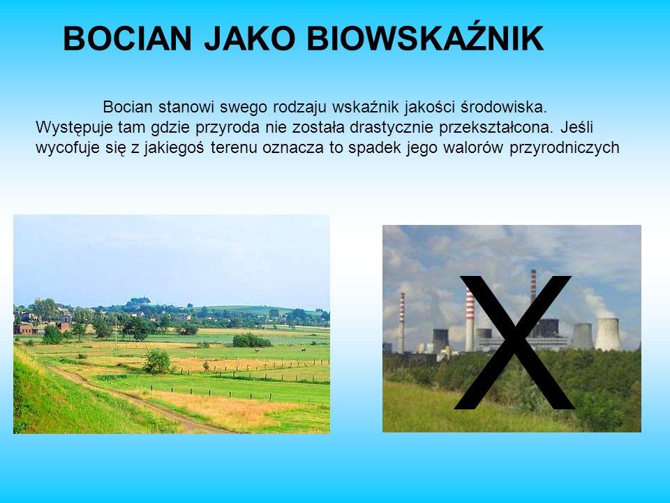 BOCIAN JAKO BIOWSKAŹNIK Bocian stanowi swego rodzaju wskaźnik jakości środowiska. Występuje tam gdzie przyroda nie została drastycznie przekształcona.