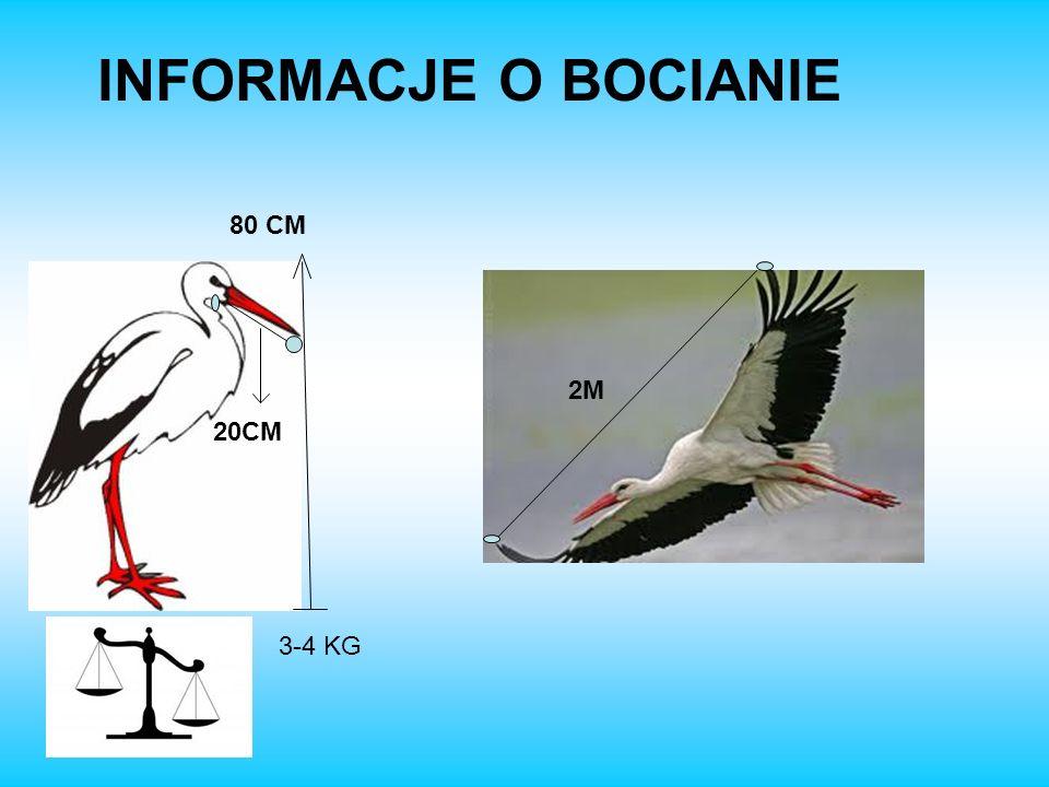 INFORMACJE O BOCIANIE 80 CM 2M 3-4 KG 20CM