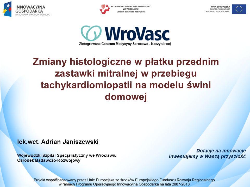 Zmiany histologiczne w płatku przednim zastawki mitralnej w przebiegu tachykardiomiopatii na modelu świni domowej lek.wet.