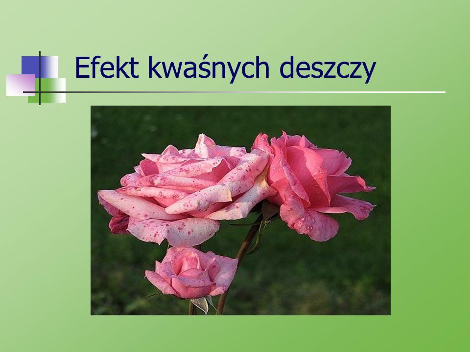 Za pomoc przy pracy dziękujemy: www.plfoto.com www.sciaga.pl/tekst/30544-31- kwasne_deszcze_przyczyny_i_skutki http://www.bryk.pl/teksty/liceum/geogr afia/geografia_fizyczna/8223- kwa%C5%9Bne_deszcze_charakterysty ka_i_zagro%C5%BCenia.html