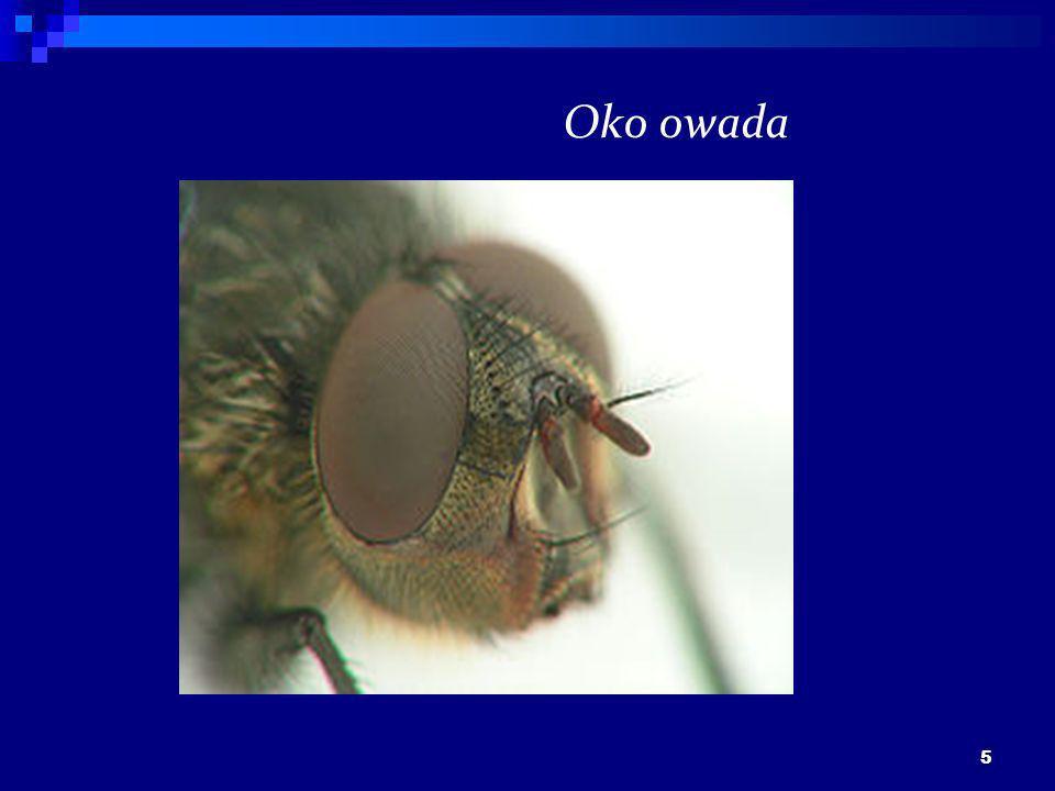 5 Oko owada