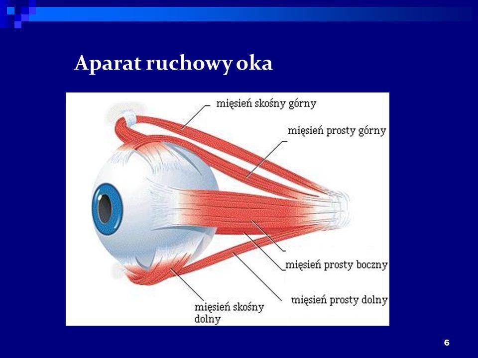 6 Aparat ruchowy oka
